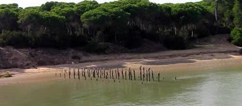 El Doñana andaluz, refugio de aves y espectáculo natural